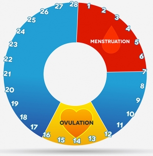 Cervical Mucus And Ovulation – Everything You Need To Know