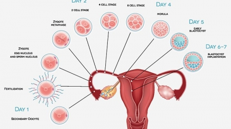 8 Early Signs And Symptoms Of Pregnancy Implantation