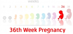 36th Week Pregnancy – Symptoms, Baby Development, Tips And Body Changes